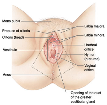Labiaplasty Beverly Hills